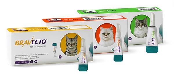 Bravecto kat spot-on Image